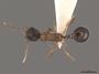 2822024 Aphaenogaster rudis d IN