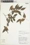 Myrcia DC., Bolivia, D. N. Smith 14371, F