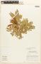 Abarema jupunba (Willd.) Britton & Killip var. jupunba, Brazil, C. A. Cid Ferreira 7858, F