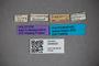 3048420 Planeustomus tropicus HT labels IN