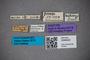 3048422 Bledius aethiops LT labels IN