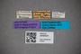3048424 Bledius albomaculatus HT labels IN