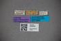 3048428 Bledius auriculicollis ST labels IN
