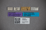 3048434 Bledius bonariensis HT labels IN