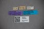 3048435 Bledius bosnicus HT labels IN