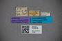 3048438 Bledius capra ST labels IN