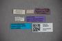 3048441 Bledius carinicollis ST labels IN