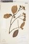 Calycophyllum spruceanum (Benth.) K. Schum., Brazil, G. T. Prance 7463, F