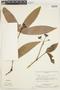 Ixora acuminatissima Müll. Arg., Venezuela, J. A. Steyermark 75339, F