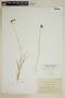 Carex praticola image