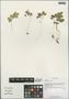 Adoxa xizangensis G. Yao, China, D. E. Boufford 37089, F