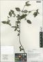 Barleria cristata L., China, D. E. Boufford 35211, F