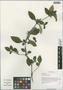 Barleria cristata L., China, D. E. Boufford 37933, F