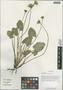 Caltha scaposa Hook. f. & Thompson, China, D. E. Boufford 36089, F