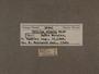 30941 Chilina minuta label