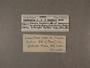 30904 Annularia barkeri label