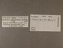 39413 Bulimulus mordens label