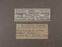 39720 Bulimulus achrous label