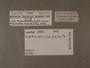 50732 Bulimulus haenkei label