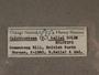 118950 Opisthostoma hailei label