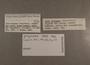 114164 Drymaeus gorgonensis label