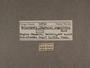50730 Solaropsis angulifera label