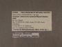 312442 Lilloiconcha aysensis label