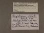 328440 Jaspidiconus oleiniki label