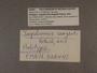 328441 Jaspidiconus sargenti label