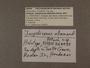 328435 Jaspidiconus allamandi label