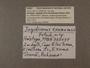 328437 Jaspidiconus exumaensis label