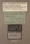 308260 Partula varia var pulchra label