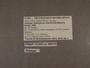312443 Radiodiscus villarricensis label