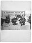 Field Museum photo negatives collection; Wien specimen of Cerastium behmianum Muschl., PERU, A. Weberbauer 338, Type [status unknown], W