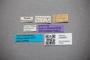 3048457 Bledius gradensis ST labels IN