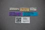3048462 Bledius kosempoensis ST labels IN