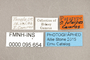 95654 Thecophora luteipes PT labels IN