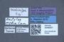 3048051 Delopsis media ST labels IN