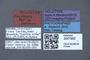 3047992 Pseudopsis petila HT labels IN