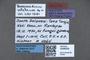 3048009 Baeoceridium celebense HT labels IN