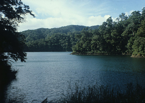 Lowland forest surrounding Lake Balinsasayao, Negros Island. Photograph by PD Heideman. [Copyright] The Field Museum