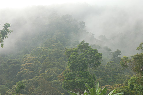 Mature lowland forest at 700m elevation on Mt. Palali, Nueva Vizcaya Province, Luzon. (c) Field Museum of Natural History