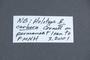 3048007 Eubaeocera cerbera HT labels 3 IN