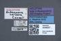 3048007 Eubaeocera cerbera HT labels IN