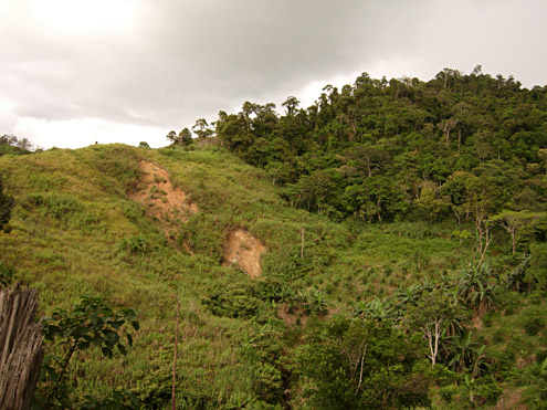 Lowland forest at about 600m elevation in the Mingan Mountains, Aurora Province, Luzon. Photograph by DS Balete. [Copyright] The Field Museum