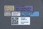 3048013 Eupiestus luzonicus HT labels IN