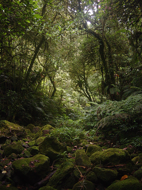 Streambeds in mature montane forest often are dry except during extremely heavy rains. Mt. Banahaw, 1465m, Quezon Province, Luzon. Photograph by EA Rickart. [Copyright] The Field Museum