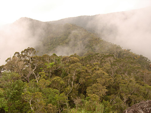 Mature montane rainforest at about 1500m on Mt. Palali, Nueva Vizcaya Province, Luzon. (c) The Field Museum