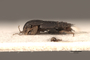 3047997 Habrocerus costaricensis HT p IN