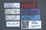 3047999 Nomimocerus peckorum HT labels IN